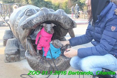 ZOO 31.1.2016 Bertrando a Chantia (22)