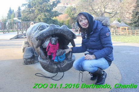 ZOO 31.1.2016 Bertrando a Chantia (23)