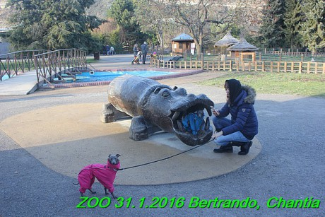 ZOO 31.1.2016 Bertrando a Chantia (24)