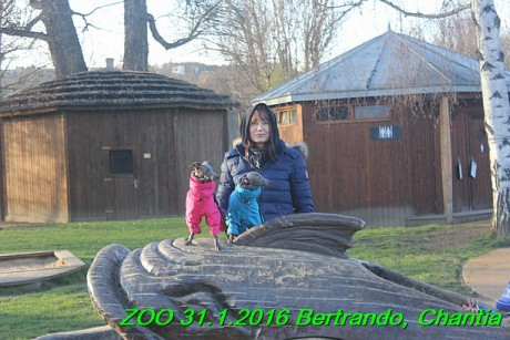 ZOO 31.1.2016 Bertrando a Chantia (26)