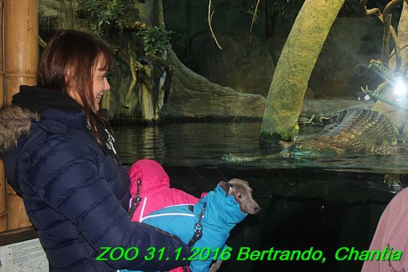 ZOO 31.1.2016 Bertrando a Chantia (32)