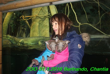 ZOO 31.1.2016 Bertrando a Chantia (33)
