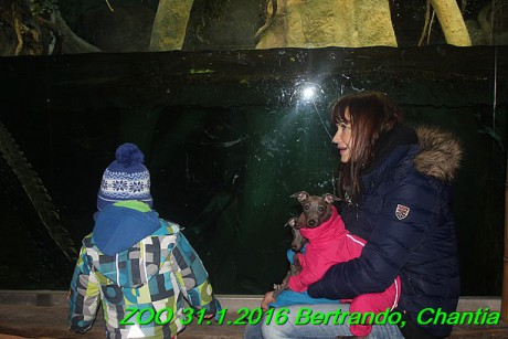 ZOO 31.1.2016 Bertrando a Chantia (35)