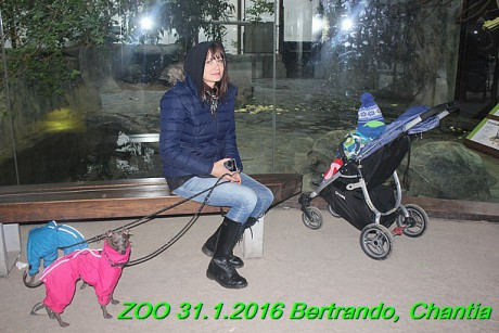 ZOO 31.1.2016 Bertrando a Chantia (36)