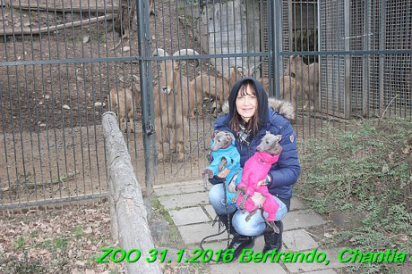 ZOO 31.1.2016 Bertrando a Chantia (37)