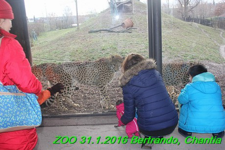 ZOO 31.1.2016 Bertrando a Chantia (38)