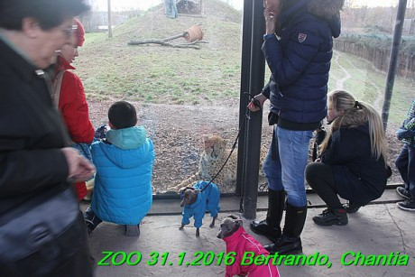 ZOO 31.1.2016 Bertrando a Chantia (42)