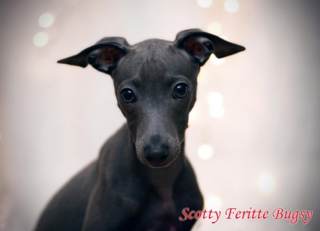 Scotty Feritte Bugsy 01