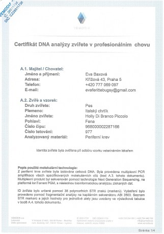 Holly Di Branco Piccolo DNA certifikat CZ