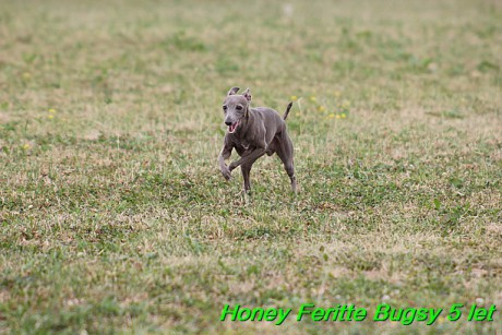 Honey Feritte Bugsy 25.7.2015 (43)