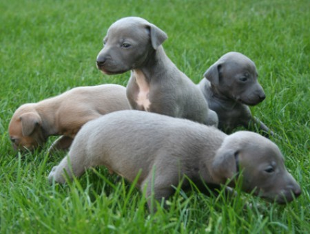 litter-l-3-5-weeks-old.jpg