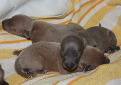litter-o--1-week-old--19--kopie.jpg