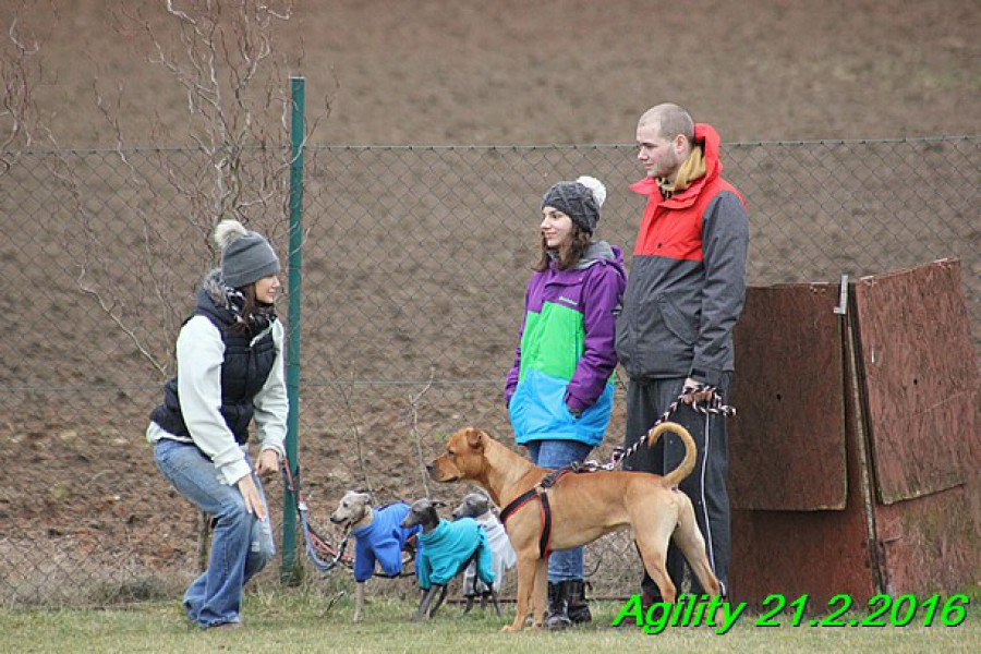 agility-21.2.2016-gisele-hollie-hannach--8-.jpg