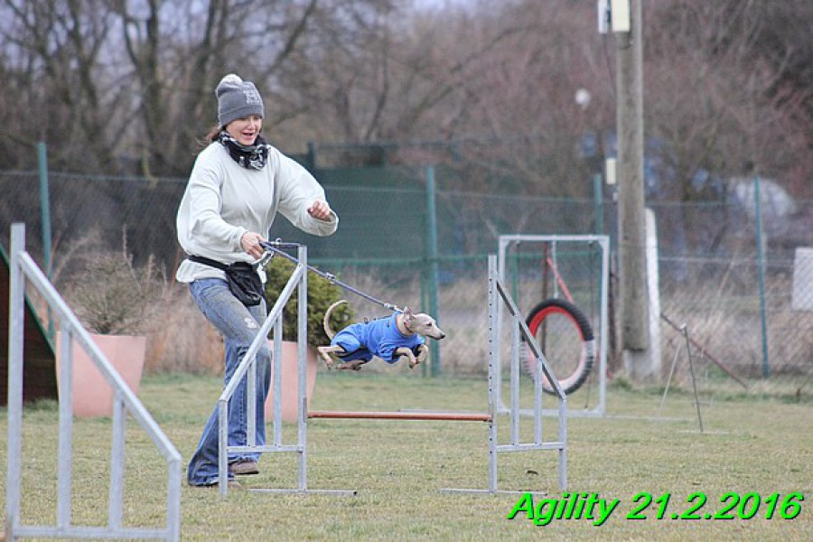 agility-21.2.2016-gisele-hollie-hannach--436-.jpg