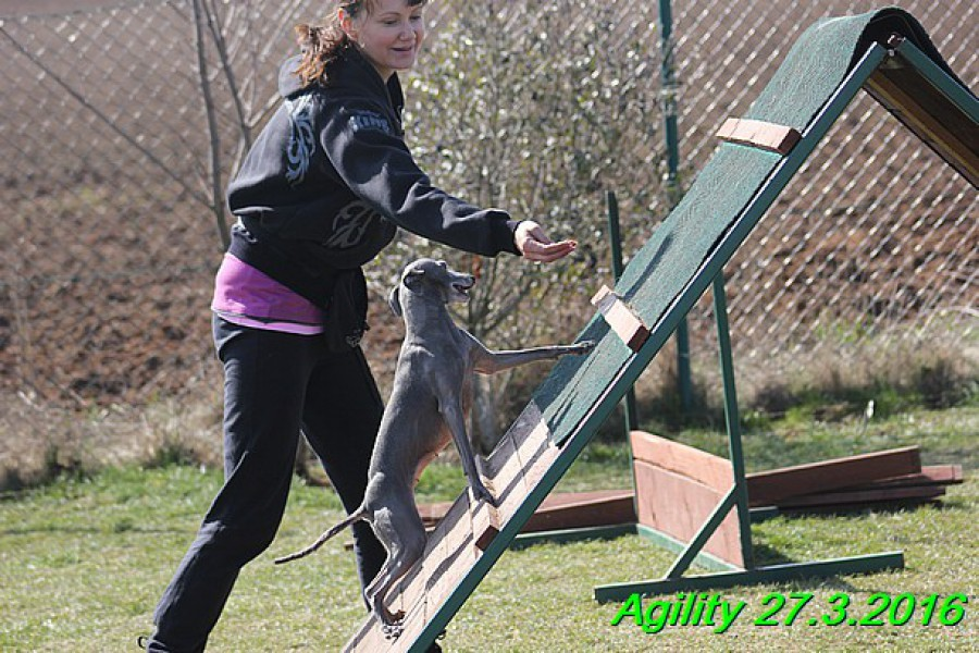 agility-27.3.2016-tana-gloria-hollie--139-.jpg