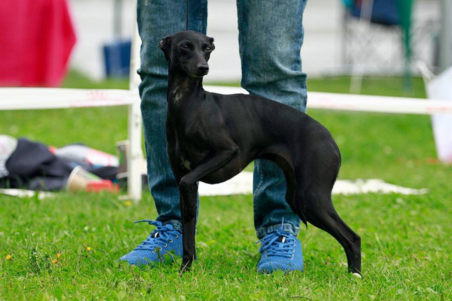 dogcastles-black-diamond.jpg
