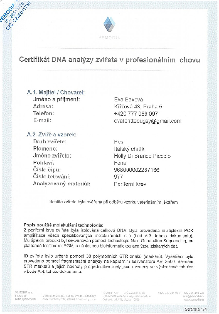 holly-di-branco-piccolo-dna-certifikat-cz.jpg