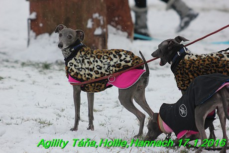 Agility Tana, Hollie,Hannach 17.1.2016 (2)