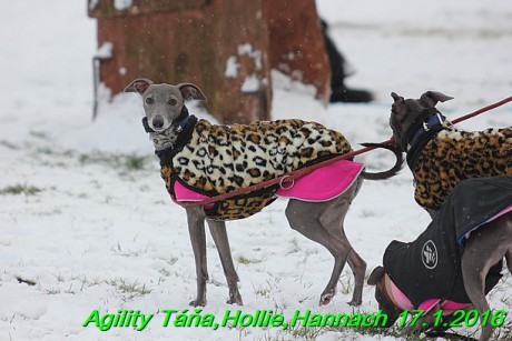 Agility Tana, Hollie,Hannach 17.1.2016 (3)