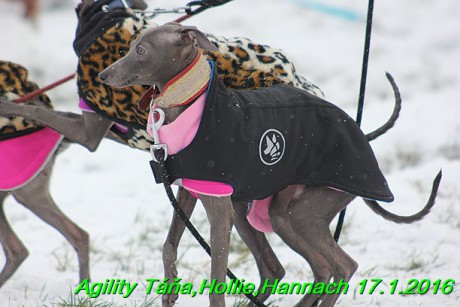 Agility Tana, Hollie,Hannach 17.1.2016 (5)