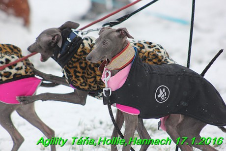 Agility Tana, Hollie,Hannach 17.1.2016 (6)