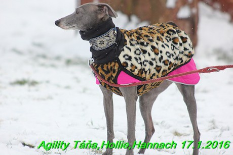 Agility Tana, Hollie,Hannach 17.1.2016 (9)