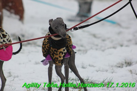 Agility Tana, Hollie,Hannach 17.1.2016 (13)