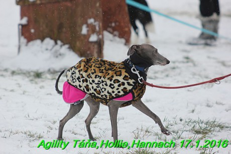 Agility Tana, Hollie,Hannach 17.1.2016 (16)