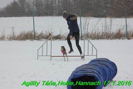 Agility Tana, Hollie,Hannach 17.1.2016 (17)