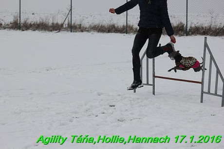 Agility Tana, Hollie,Hannach 17.1.2016 (18)