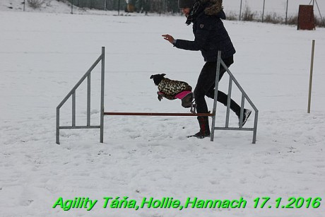 Agility Tana, Hollie,Hannach 17.1.2016 (19)