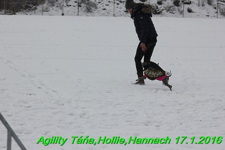 Agility Tana, Hollie,Hannach 17.1.2016 (20)