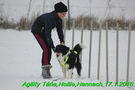 Agility Tana, Hollie,Hannach 17.1.2016 (21)