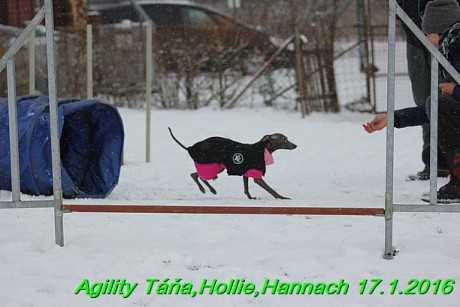 Agility Tana, Hollie,Hannach 17.1.2016 (22)