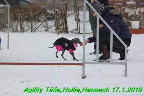 Agility Tana, Hollie,Hannach 17.1.2016 (23)