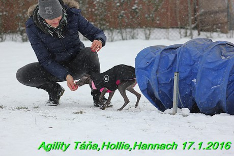 Agility Tana, Hollie,Hannach 17.1.2016 (24)