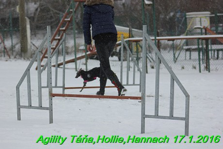 Agility Tana, Hollie,Hannach 17.1.2016 (25)