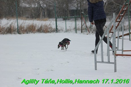 Agility Tana, Hollie,Hannach 17.1.2016 (26)