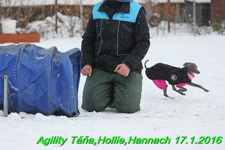 Agility Tana, Hollie,Hannach 17.1.2016 (27)