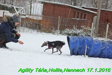 Agility Tana, Hollie,Hannach 17.1.2016 (28)
