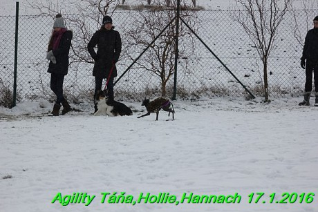 Agility Tana, Hollie,Hannach 17.1.2016 (29)