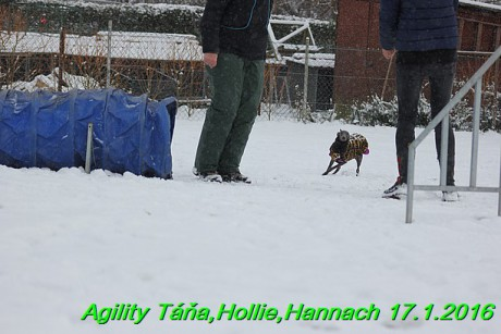 Agility Tana, Hollie,Hannach 17.1.2016 (30)