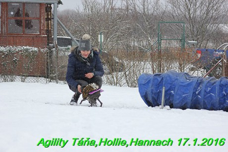 Agility Tana, Hollie,Hannach 17.1.2016 (31)