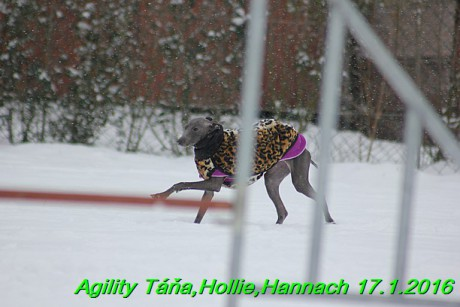 Agility Tana, Hollie,Hannach 17.1.2016 (32)