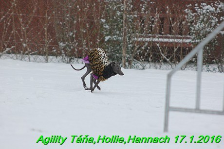 Agility Tana, Hollie,Hannach 17.1.2016 (33)