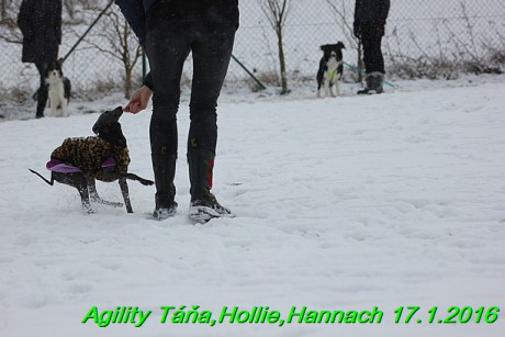 Agility Tana, Hollie,Hannach 17.1.2016 (34)