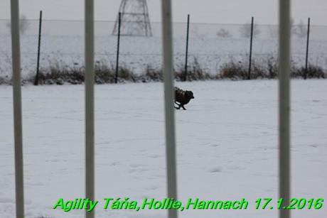 Agility Tana, Hollie,Hannach 17.1.2016 (35)