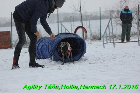 Agility Tana, Hollie,Hannach 17.1.2016 (36)