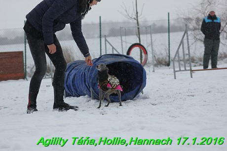 Agility Tana, Hollie,Hannach 17.1.2016 (37)