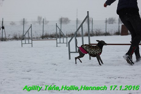 Agility Tana, Hollie,Hannach 17.1.2016 (38)
